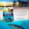 Endless Ocean: Blue World - NGamer Brasil 33